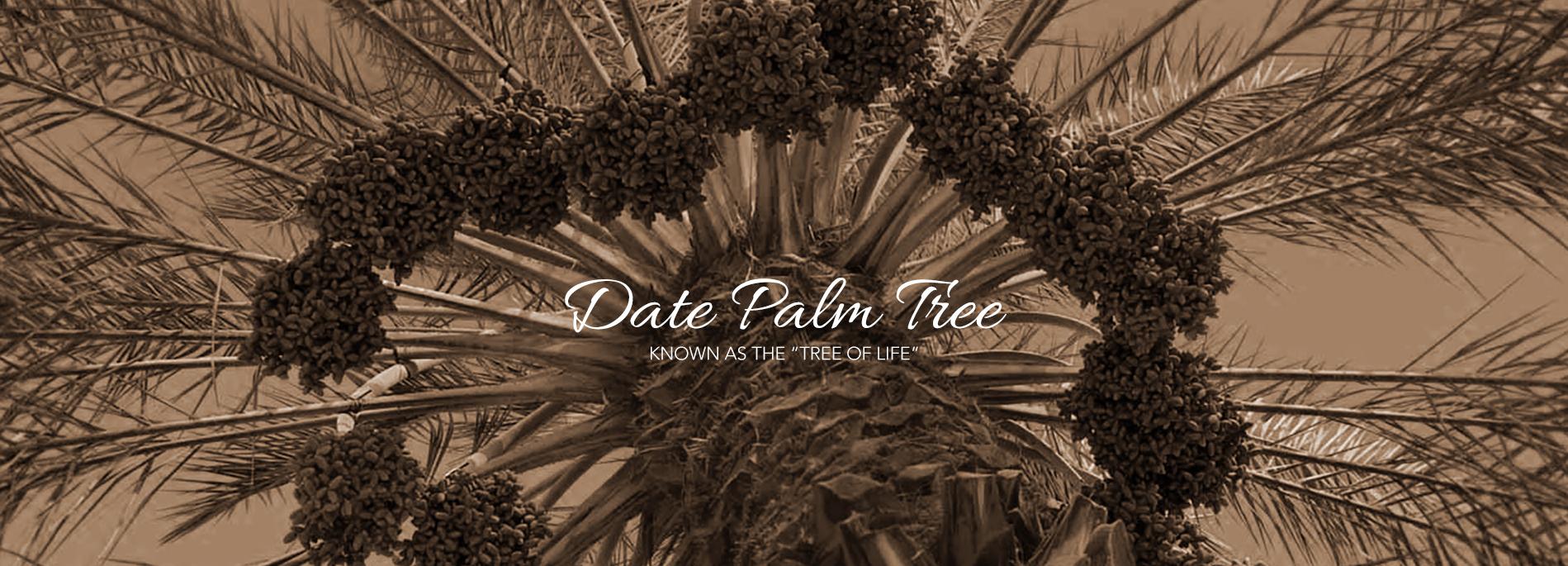 PALM-DATE